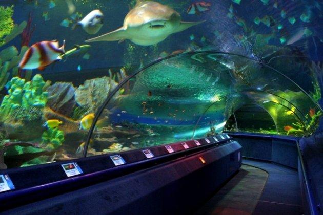 океанариум фото в спб