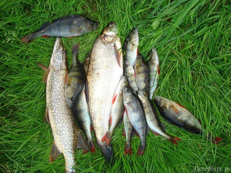 на что ловить на суходольском озере