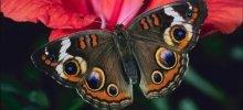 Музей бабочек